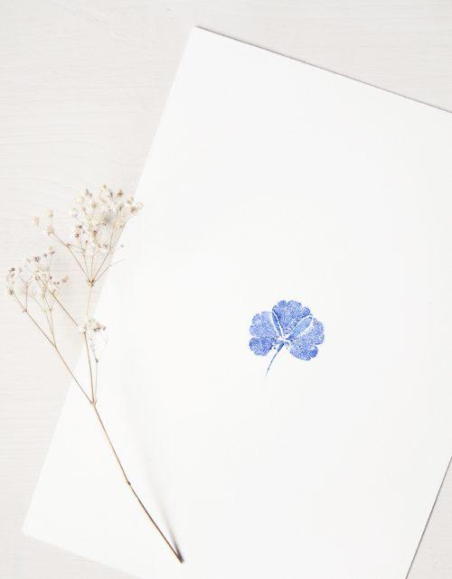 Affiche Ancolie - illustration de feuille d'ancolie sauvage • L'atelier 23janvier propose des affiches naturelles, collection dédiée au monde végétal