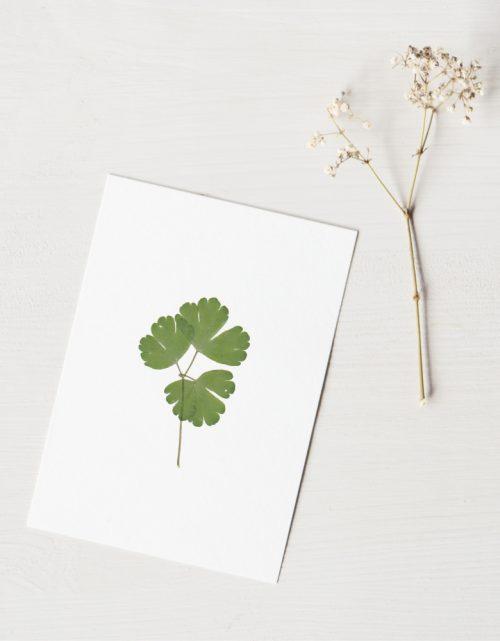 Herbier ancolie (feuille) - carte décorée d'une feuille d'ancolie des Pyrénées • Herbier fabriqué dans le sud-ouest par l'atelier 23janvier