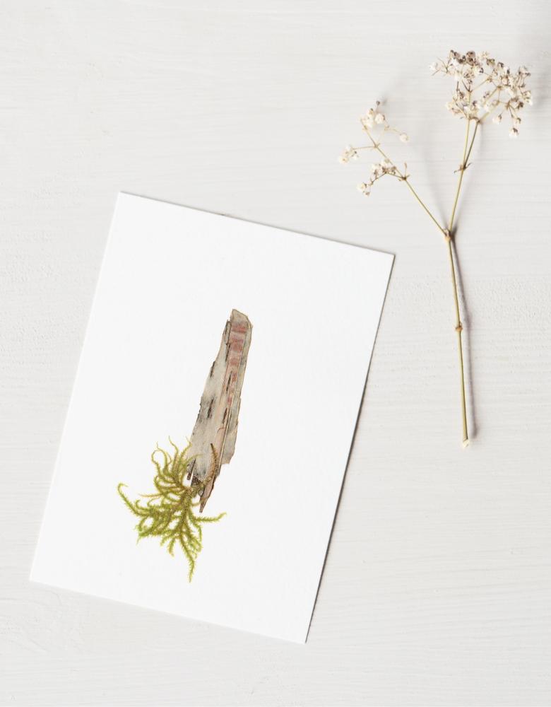 Herbier bouleau (écorce) - carte décorée d'une écorce de bouleau • Création unique par l'atelier 23janvier