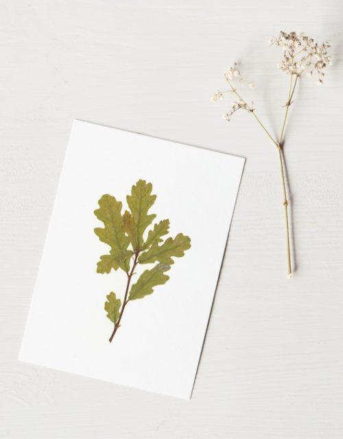 Herbier chêne pédonculé (rameau) - carte décorée d'une petite branche de chêne • Herbier fabriqué dans le sud-ouest par l'atelier 23janvier