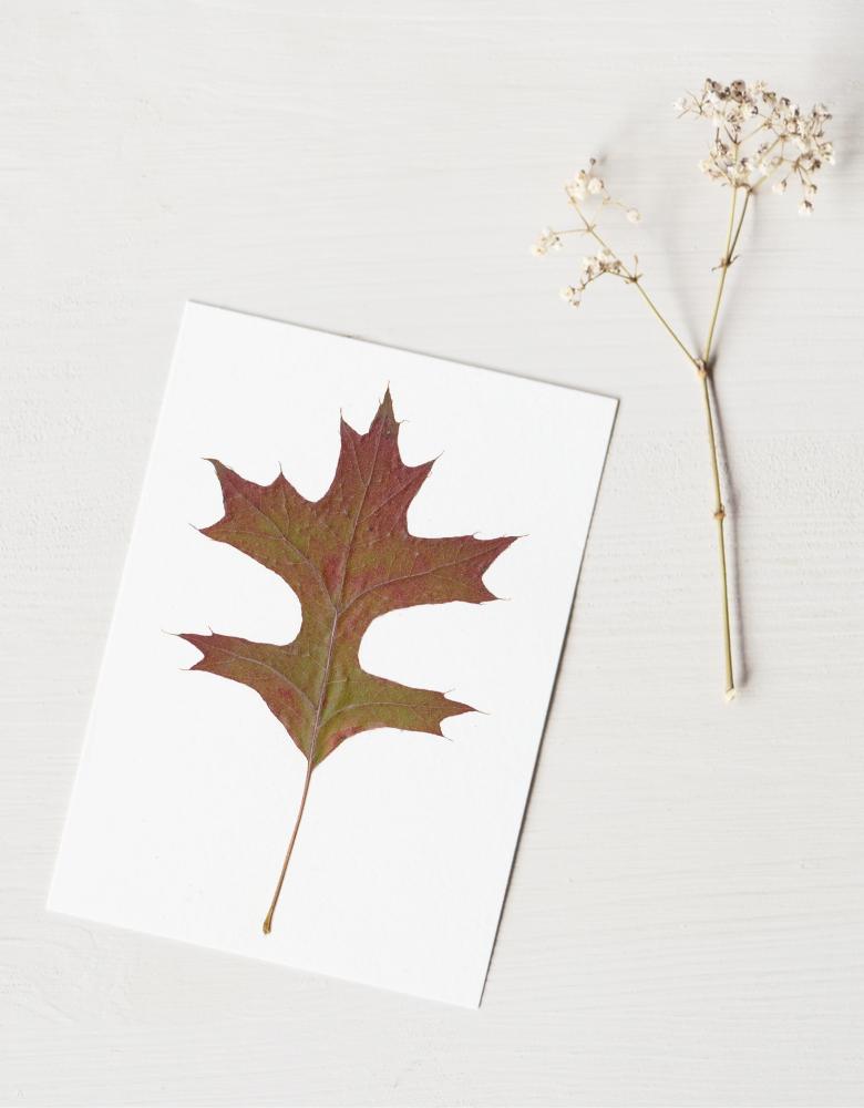 Herbier chêne des marais (feuille) - carte décorée d'une feuille de chêne • Herbier automnal créé dans le sud-ouest par l'atelier 23janvier