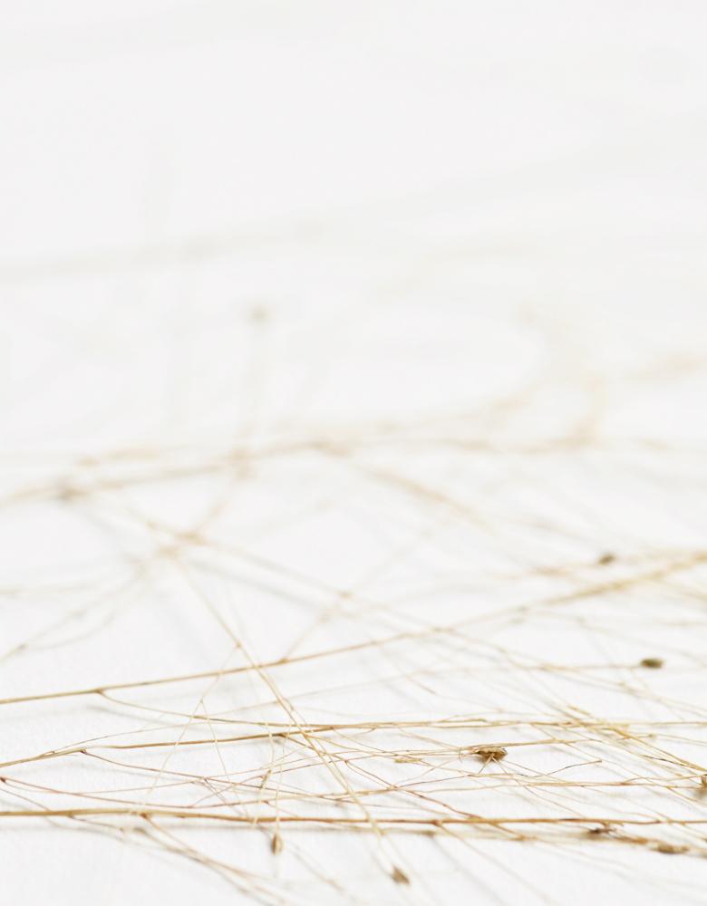 Herbier graminée - affiche A3 décorée d'une fleur de graminée panicum • Création naturelle, herbier unique à encadrer / atelier 23janvier