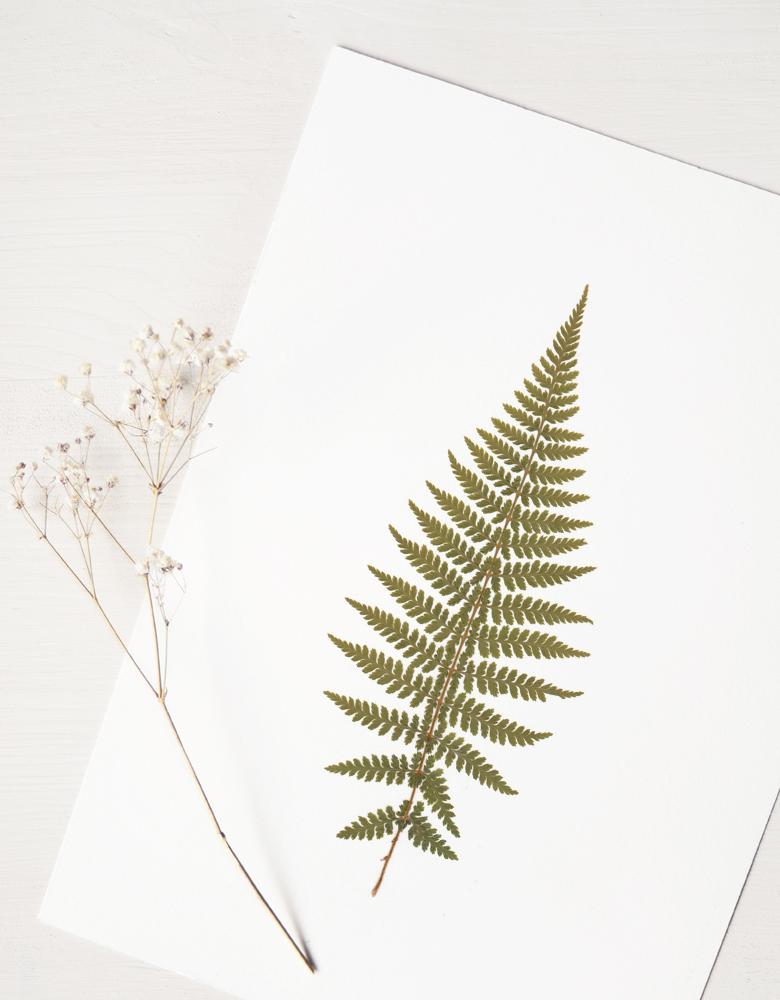 Herbier fougère - affiche A4 décorée d'une feuille de fougère • Herbier unique, invitation à découvrir les détails subtils du monde végétal