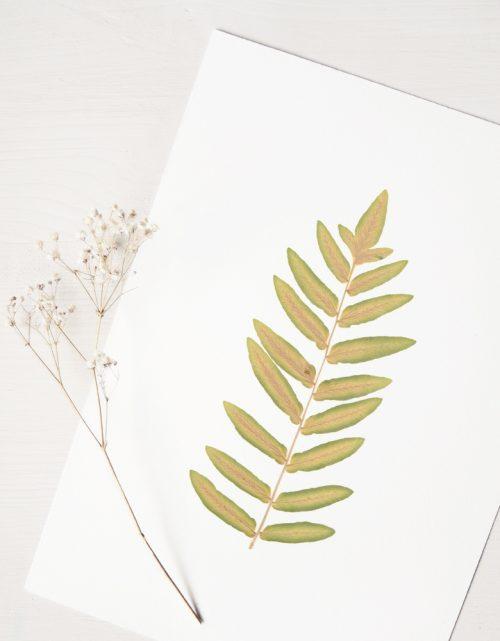 Herbier fougère royale - affiche décorée d'une feuille de fougère • Création naturelle, invitation à découvrir les détails subtils du monde végétal