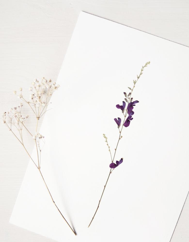 Herbier sauge - affiche A4 • Décoration florale unique