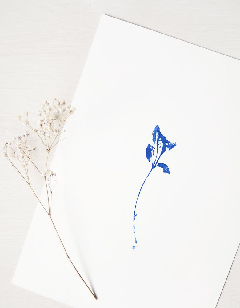 Affiche Fleur sauvage - illustration florale délicate • L'atelier 23janvier propose une collection d'affiches inspirée du monde végétal et de la nature