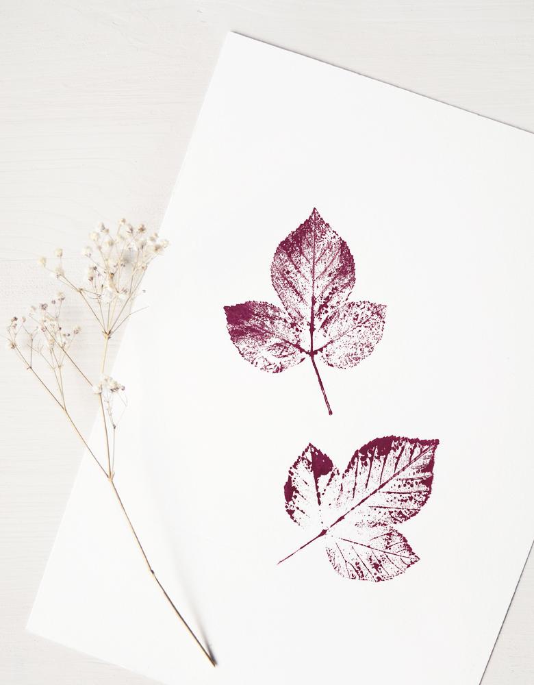 Affiche Ronce - illustration de plante sauvage • L'atelier 23janvier propose une collection d'affiches inspirée du monde végétal et de la nature