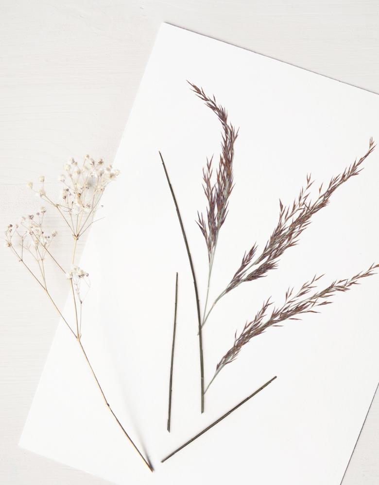 Herbier Bouquet Landes - composition de plantes maritimes • Herbier unique à encadrer, invitation à découvrir les détails du monde végétal