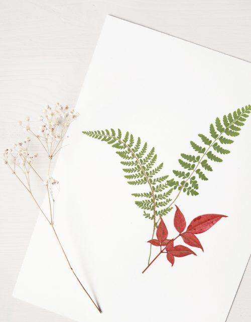 Herbier Bouquet fougère - composition délicate fougère et bambou sacré • Herbier à encadrer, invitation à découvrir les détails du monde végétal