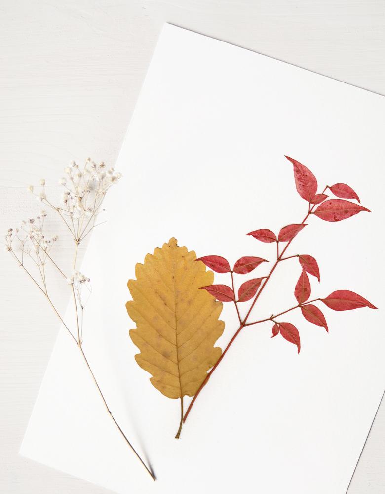 Herbier Bouquet nandina - composition automne bambou sacré et chêne • Herbier à encadrer, invitation à découvrir les détails du monde végétal