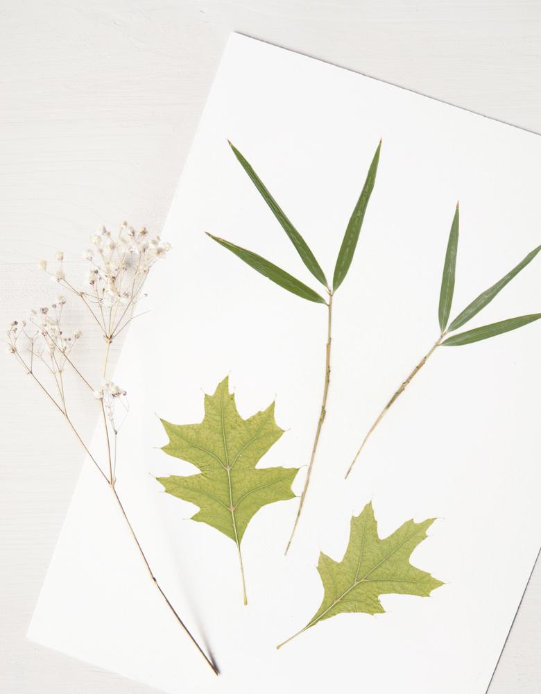 Herbier Bouquet bambou - composition printanière et délicate • Herbier à encadrer, invitation à découvrir les détails du monde végétal