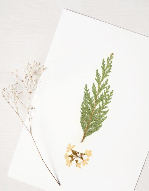 Herbier Bouquet conifère - affiche végétale à encadrer • atelier 23janvier