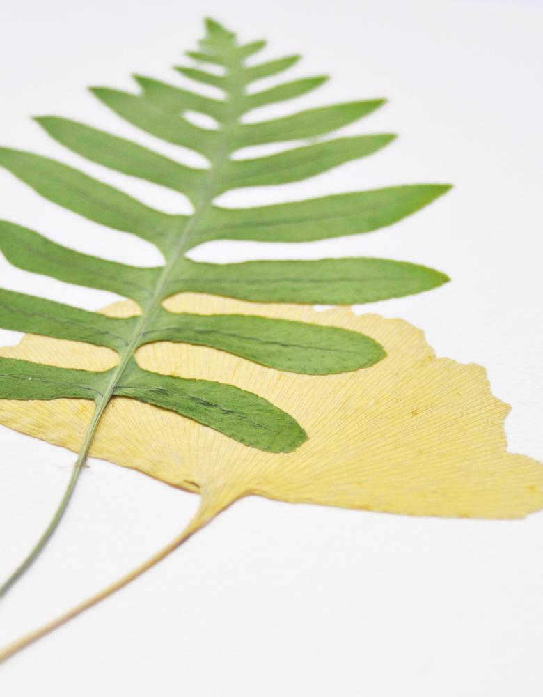 Herbier Bouquet foret - composition feuille de Ginkgo et fougère • Herbier à encadrer, invitation à découvrir les détails subtils du monde végétal