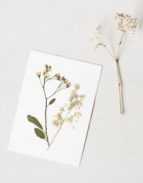 Herbier Bouquet hiver • atelier 23janvier