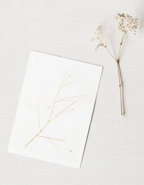 Herbier graminée panicum - carte A6 décorée d'une fleur de graminée • Herbier floral et délicat fabriqué dans le sud-ouest par l'atelier 23janvier