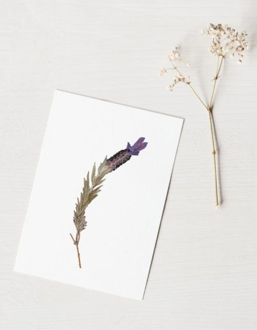 Herbier lavande - carte A6 décorée d'une fleur de lavande papillon • Herbier floral estival fabriqué dans le sud-ouest par l'atelier 23janvier