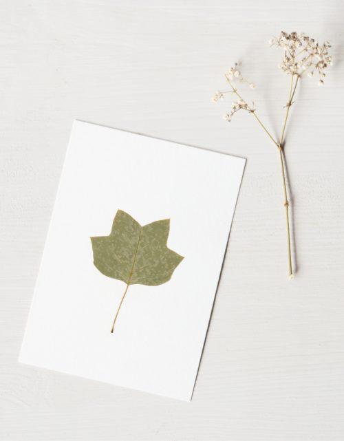 Herbier Tulipier - carte décorée d'une feuille de tulipier de Virginie • Herbier printanier créé dans le sud-ouest par l'atelier 23janvier