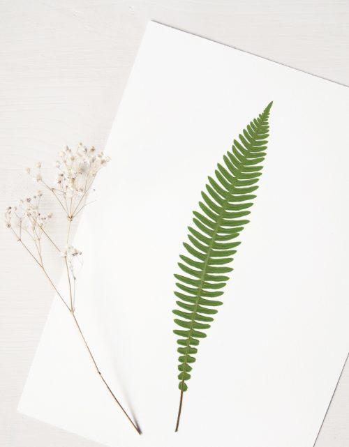 Herbier fougère blechnum - affiche A4 décorée d'une feuille de fougère • Herbier unique créé avec soin par l'atelier 23janvier