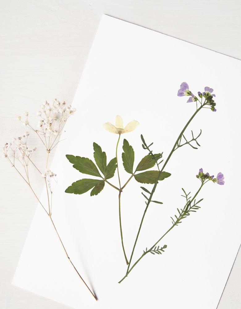Herbier Bouquet champêtre - création végétale • 23janvier