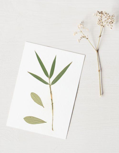 Herbier Bouquet olivier - composition bambou et feuilles d'olivier • Herbier à encadrer, invitation à découvrir les détails subtils du monde végétal