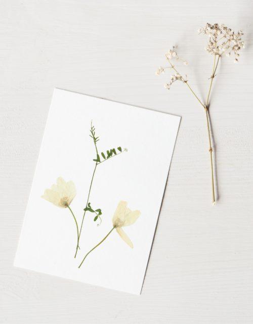 23janvier - Herbier Bouquet pivoines - décoration florale