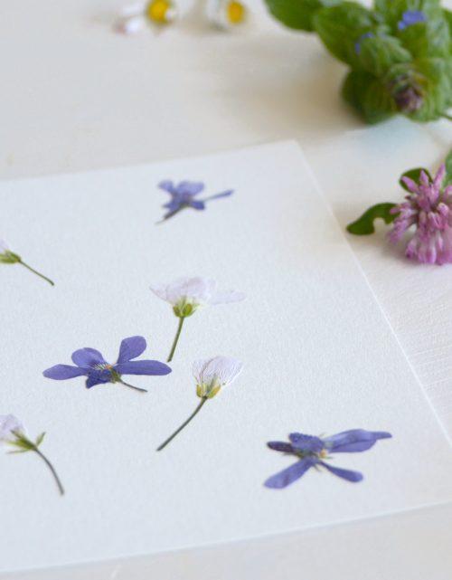 23janvier - herbier Bouquet printemps - décoration florale