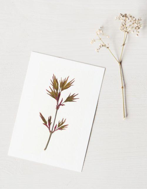 Herbier érable du Japon - carte unique • atelier 23janvier