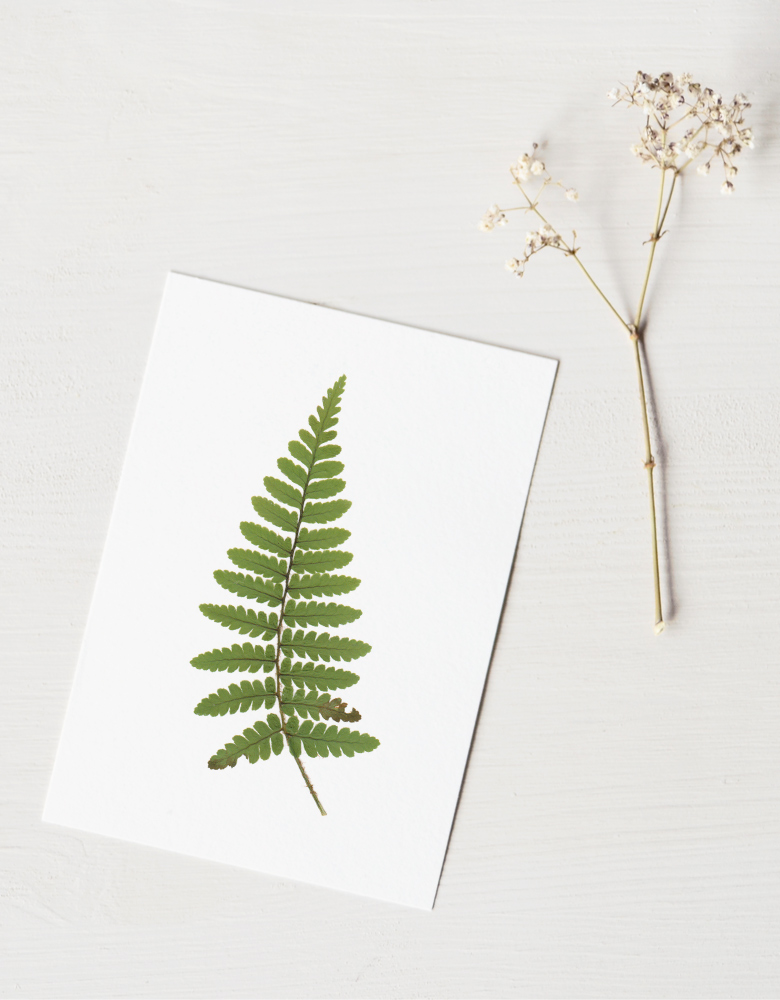 Herbier Fougère - carte décorée d'une feuille de fougère mâle • Herbier printanier créé dans le sud-ouest par l'atelier 23janvier
