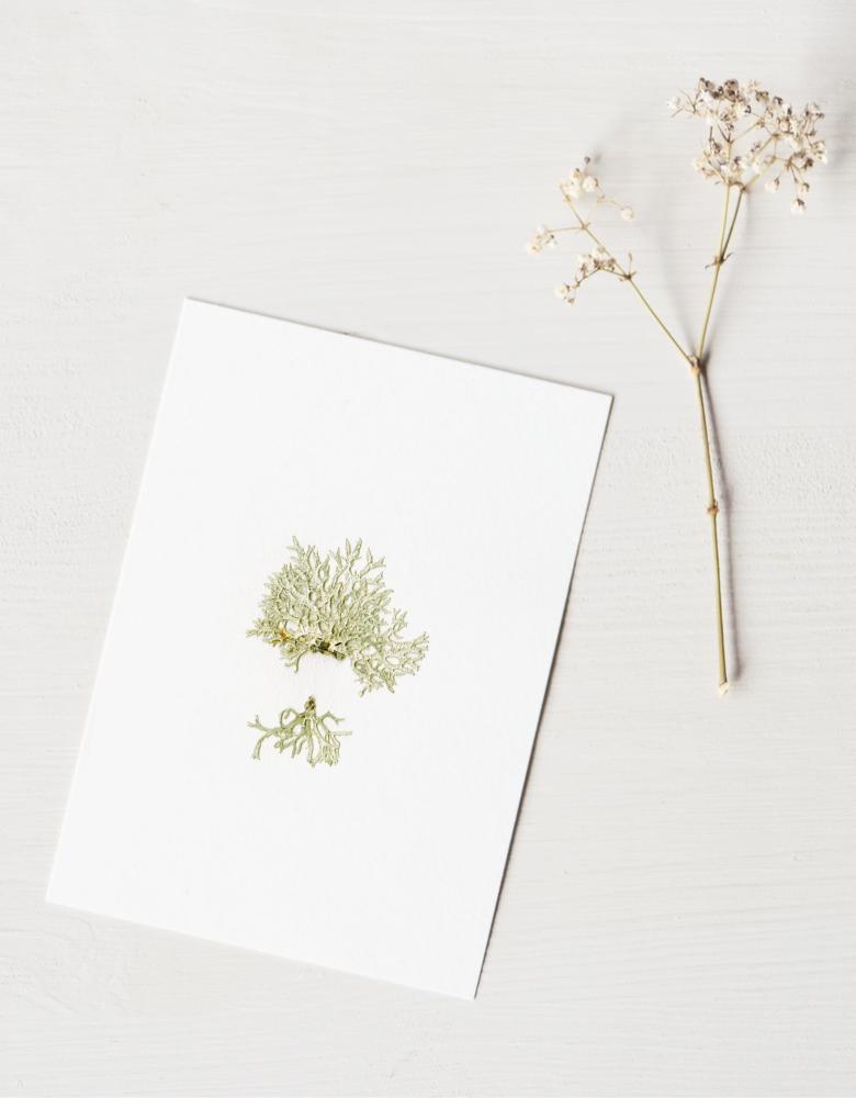 Herbier Lichen - carte A6 à encadrer • atelier 23janvier