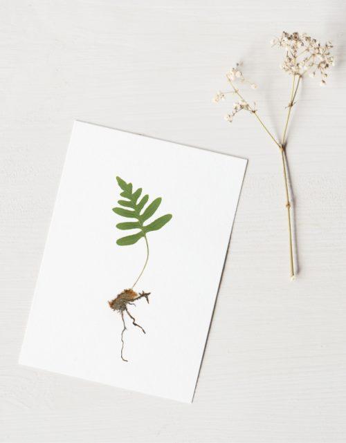 Herbier Fougère polypode - carte décorée d'un plant de Polypode vulgaire • Herbier printanier créé dans le sud-ouest par l'atelier 23janvier