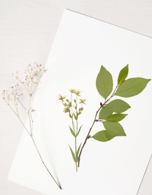 Herbier Bouquet sous-bois au printemps - composition de plantes séchées • Véritable herbier à encadrer → boutique en ligne 23janvier
