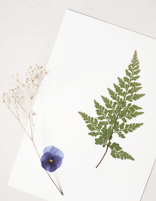 Herbier Bouquet fleur en sous-bois - affiche A4 à encadrer • Véritable herbier de plantes séchées → boutique en ligne 23janvier