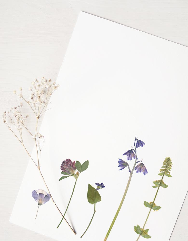 Herbier Bouquet prairie sauvage - fleurs séchées • 23janvier