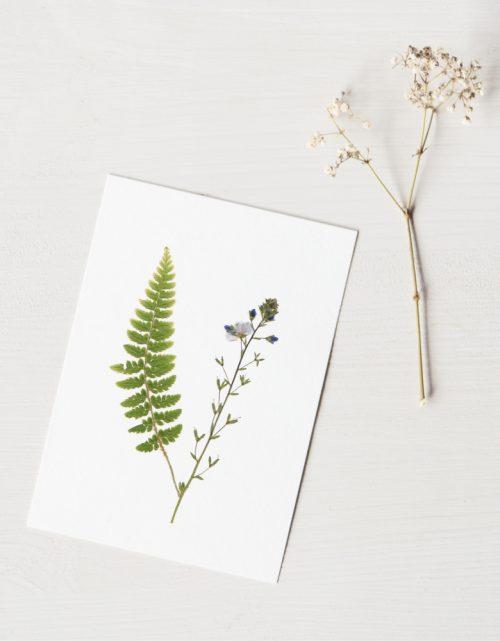 Herbier Bouquet nature sauvage • atelier 23janvier