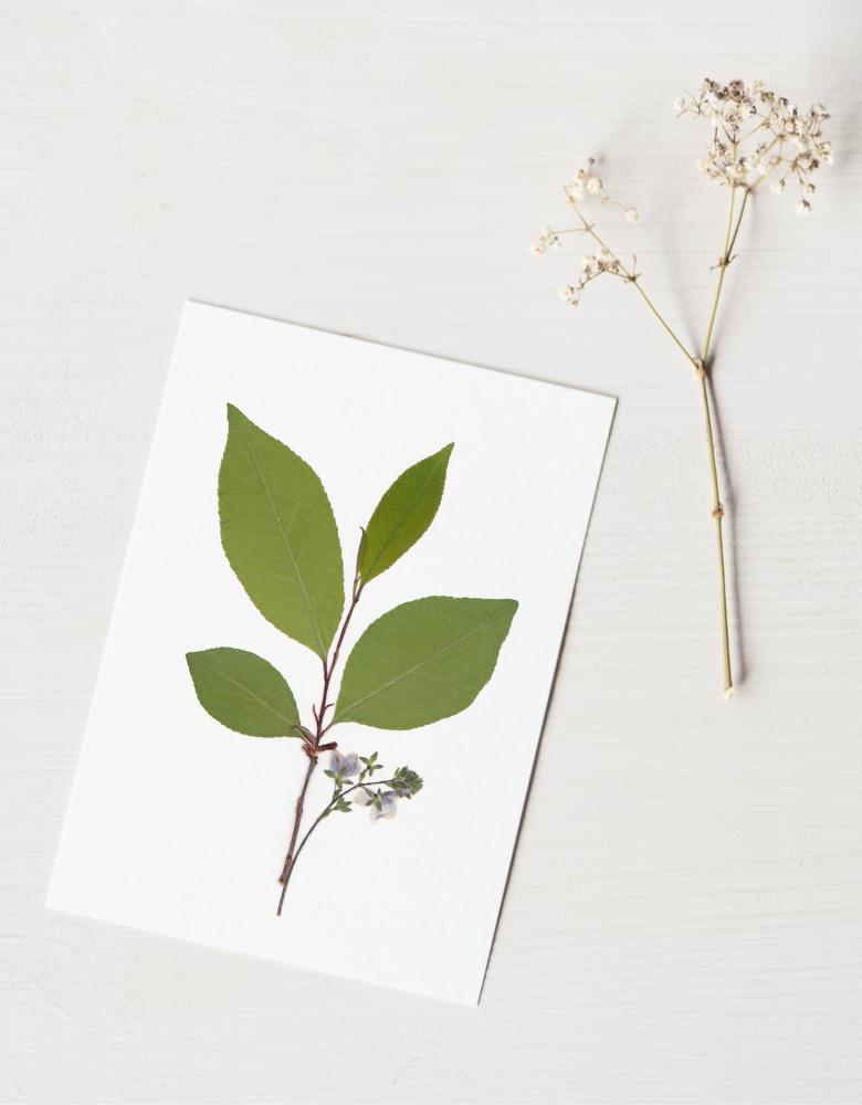 Herbier Bouquet arbre de printemps - composition de plantes séchées • Véritable herbier à encadrer de format carte A6 → boutique en ligne