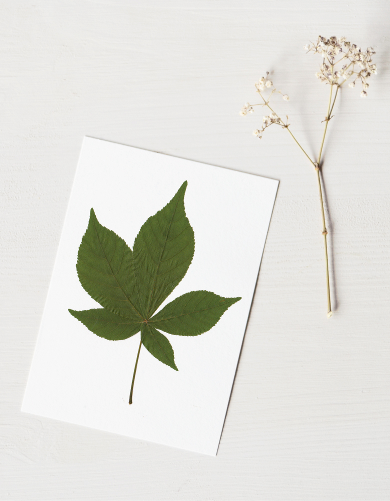 Herbier marronnier - carte décorée d'une feuille de Marronnier • Herbier printanier créé dans le sud-ouest par l'atelier 23janvier