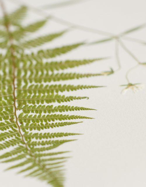 Herbier Bouquet jardin champêtre • atelier 23janvier