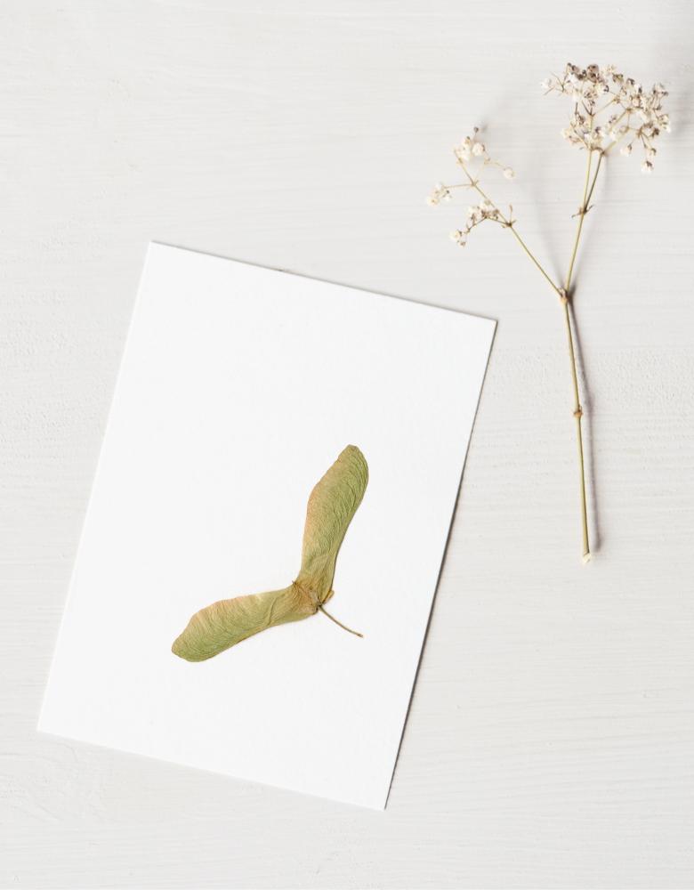 Herbier érable argenté - carte A6 • atelier 23janvier