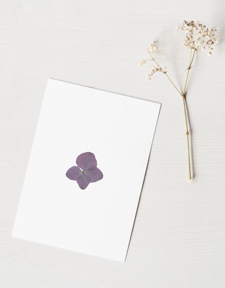 Herbier hortensia - carte A6 • 23janvier