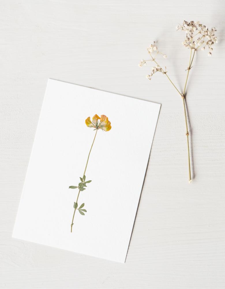 Herbier floral • 23janvier