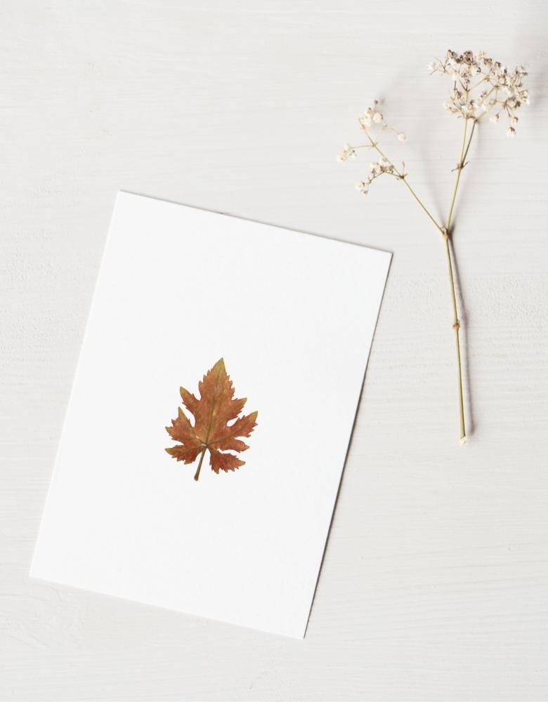 Herbier vigne - carte A6 décorée d'une feuille de vigne | Herbier unique à encadrer pour une décoration naturelle et délicate • Atelier 23janvier