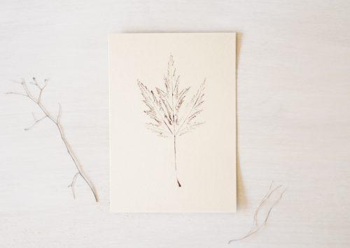 Affiche nature illustrée d'une feuille d'érable • 23janvier