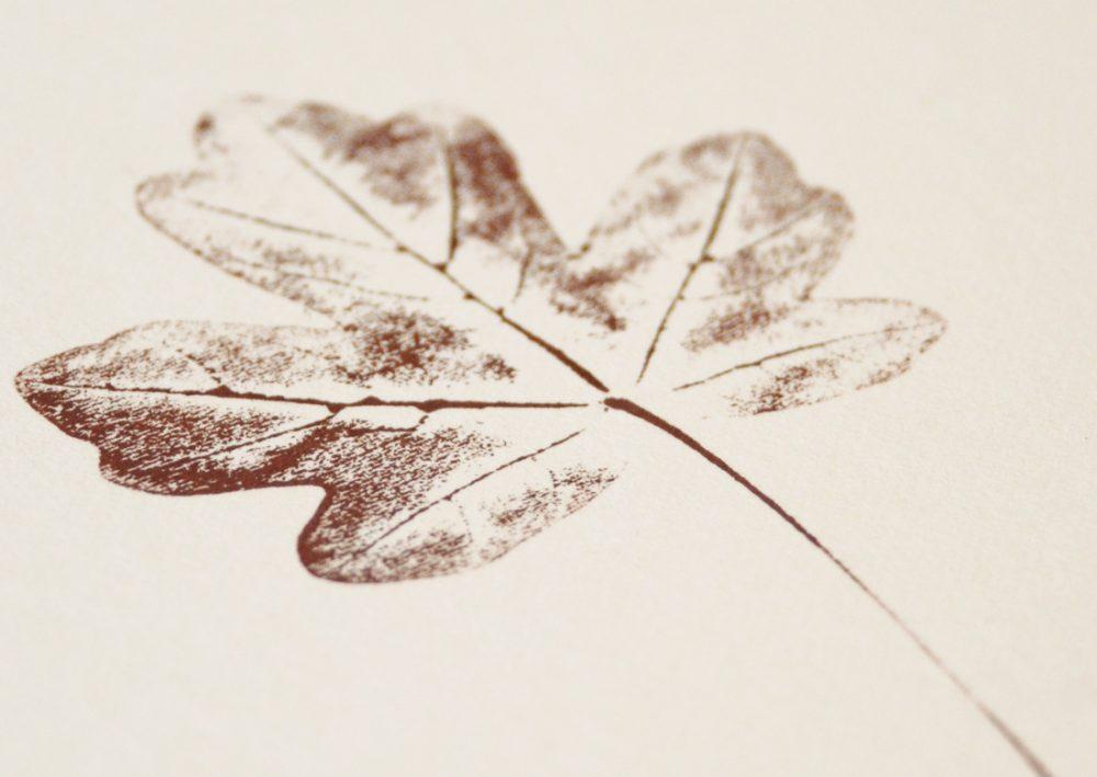Érable champêtre - petite affiche végétale • atelier 23janvier